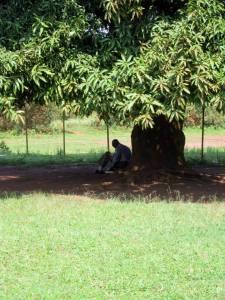 Finding God Under the Mango Tree