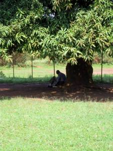 Finding God Under the Mango Tree