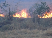 Wildfire at Kidepo Valley National Park - Uganda